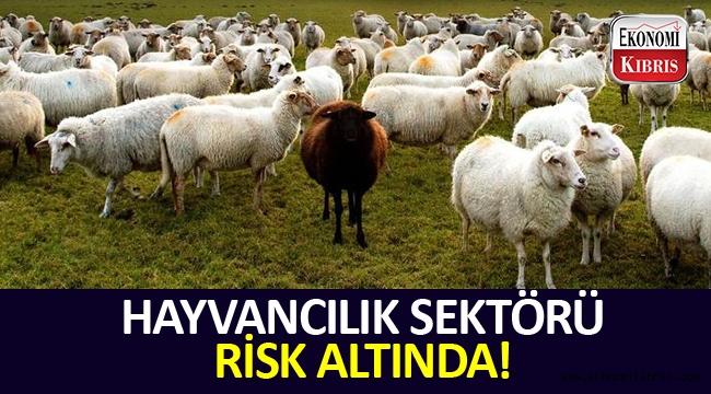 Hayvancılık sektörü dövizdeki yükselişten ötürü zor durumda...
