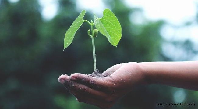 Bitkisel üretim desteklerinden yararlanma şartları belirlendi.İşte Detaylar...