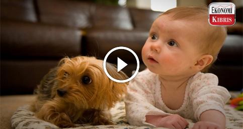 Bebekler ve hayvanlar..