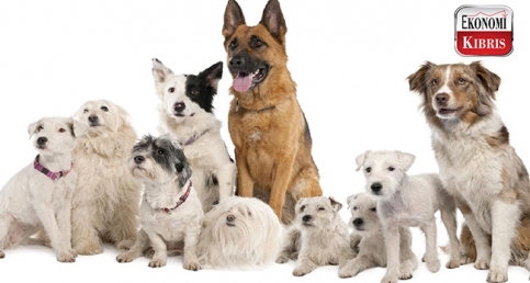 Köpekleri anlama rehberi!